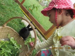 feeding Peter rabbit